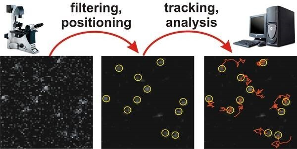 single molecule tracking approaches